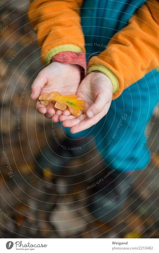 Fundstück Kind Blatt ruhig Mädchen Wald Herbst Glück Zufriedenheit wandern Kindheit frisch Trauer Wohlgefühl harmonisch Gelassenheit Sammlung