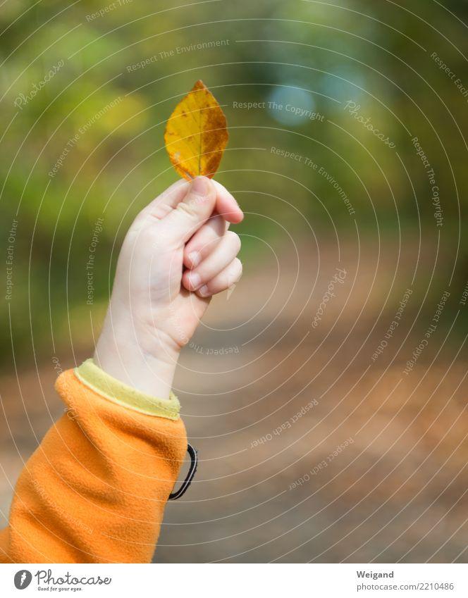 hoch die Blätter Zufriedenheit Erholung Freizeit & Hobby Spielen Gartenarbeit Kind Kleinkind Mädchen Hand Umwelt Natur Pflanze Wald Mitgefühl trösten dankbar