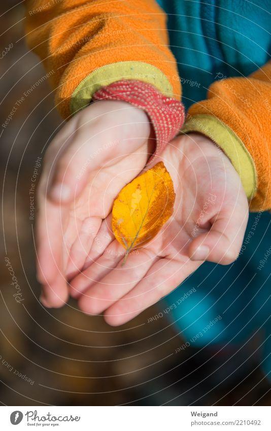 Kostbarkeit Kind Mensch Hand Blatt ruhig Freude Mädchen Wald Leben Herbst Traurigkeit Junge Glück Zufriedenheit Kindheit Trauer