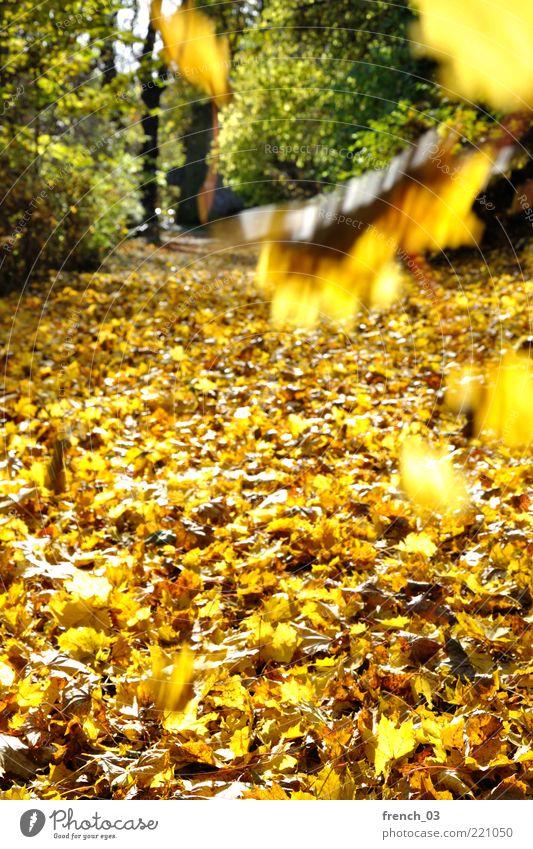 Die Blätter fallen Umwelt Natur Pflanze Herbst Schönes Wetter Wind Baum Blatt Wald leuchten gelb grün hell Wege & Pfade geradeaus herbstlich Oktober schön