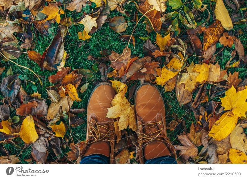 Herbststimmung Frau Mensch Jugendliche Junge Frau schön Erholung Freude 18-30 Jahre Erwachsene Leben Beine Lifestyle Stil Garten Tourismus Fuß