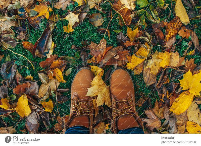 Herbststimmung Lifestyle kaufen elegant Stil Freude schön Wellness harmonisch Wohlgefühl Erholung Tourismus Abenteuer wandern Garten Mensch Junge Frau