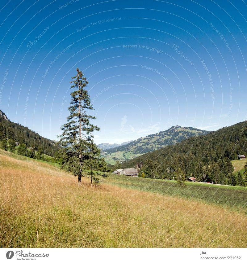zu spät für Sommer? Natur schön Sonne Pflanze Haus Wald Erholung Wiese Herbst Gras Berge u. Gebirge Landschaft Zufriedenheit Ausflug Tourismus