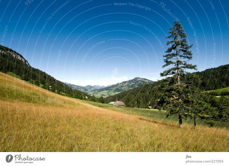 warm Wohlgefühl Erholung ruhig Tourismus Ausflug Sommerurlaub Berge u. Gebirge Natur Landschaft Herbst Schönes Wetter Tanne Ströui Wiese Felsen Alpen Saanenland