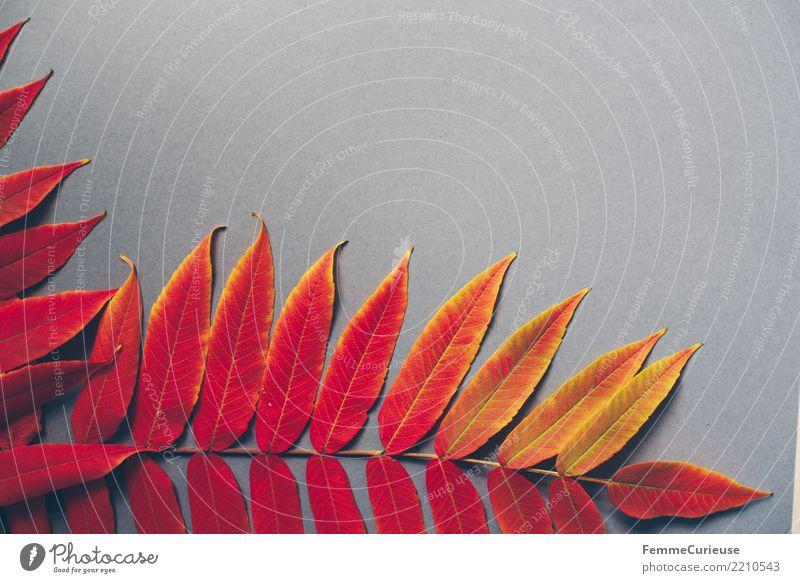 Autumn 20 Natur Herbst herbstlich Herbstlaub Herbstfärbung Herbstbeginn Blatt grau Farbe Farbfoto Innenaufnahme Studioaufnahme Textfreiraum rechts
