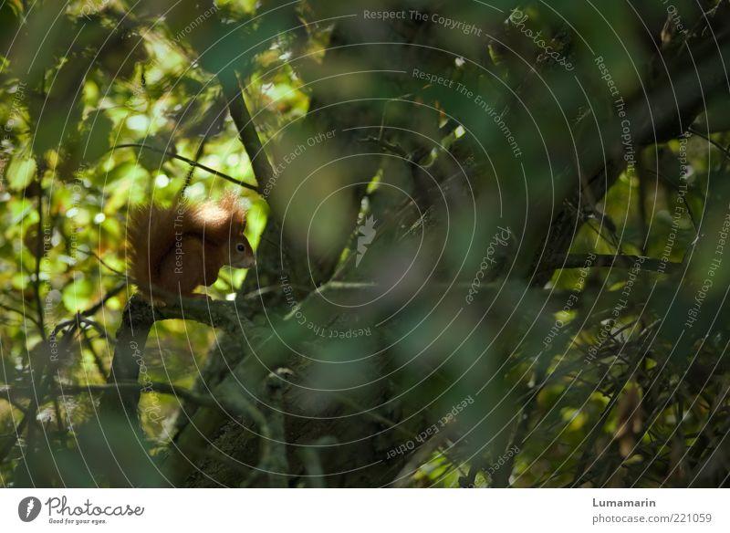 Einzelgänger Natur schön Baum Pflanze Blatt Tier Wald oben Freiheit klein Umwelt frei sitzen Ast einzigartig natürlich
