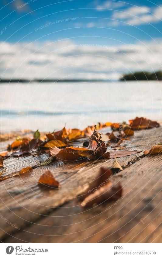 leafs, lake, love Berge u. Gebirge wandern Umwelt Natur Wolken Sonne Schönes Wetter Blatt Seeufer genießen blau braun gelb gold orange Starnberger See Herbst