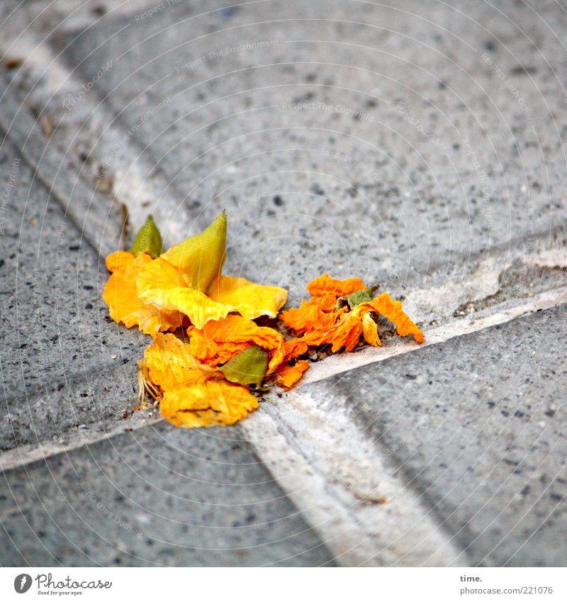 Barcelona Boulevard schön Blüte Menschenleer Beton Kreuz gelb orange Glück Zufriedenheit Optimismus authentisch Hoffnung Bodenplatten Furche Haufen Bürgersteig