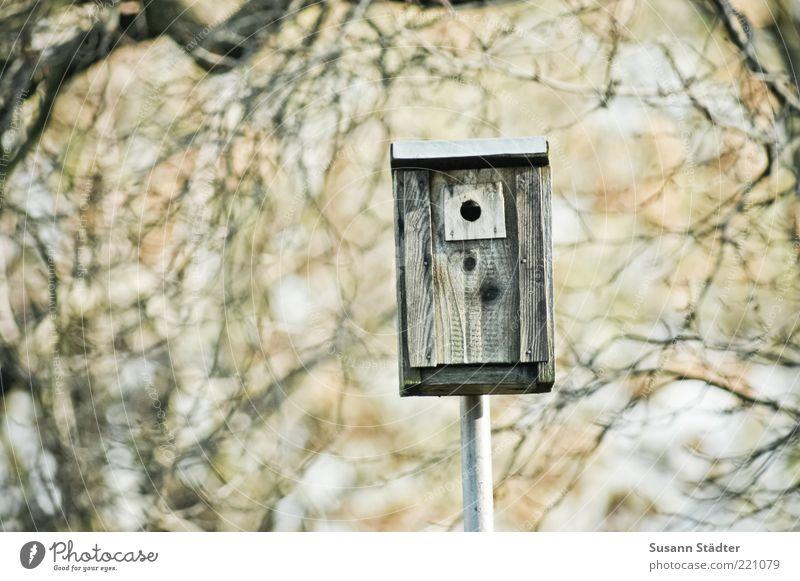 1-Raum-Wohnung Umwelt Natur Herbst Schönes Wetter Baum Futterhäuschen Ast starenkasten Geschwindigkeitsüberwachung Textfreiraum links Schwache Tiefenschärfe