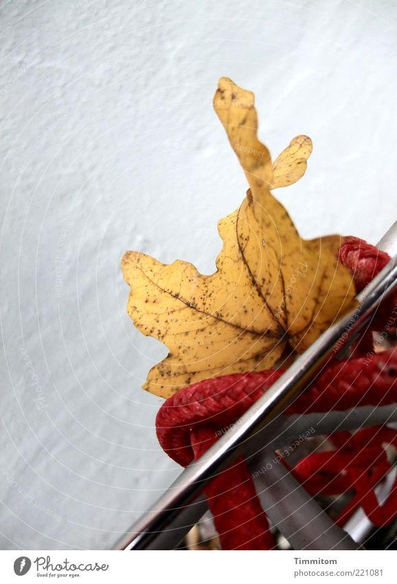 Aus ist der Traum vom Fliegen Natur rot Blatt gelb Metall Stimmung außergewöhnlich Seil Herbstlaub Blattadern