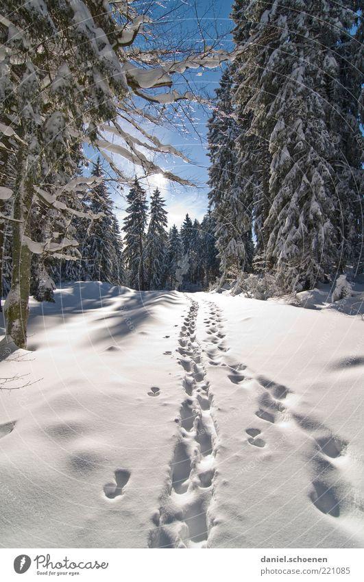 dem Winter entgegen Ferien & Urlaub & Reisen Tourismus Ausflug Schnee Winterurlaub Berge u. Gebirge wandern Klima Schönes Wetter Eis Frost Wald Fußspur hell