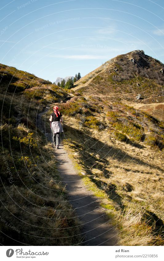 Wanderwetter V Frau Mensch Natur Ferien & Urlaub & Reisen Pflanze Landschaft Tier Ferne Berge u. Gebirge Erwachsene Umwelt Herbst feminin Bewegung Gras