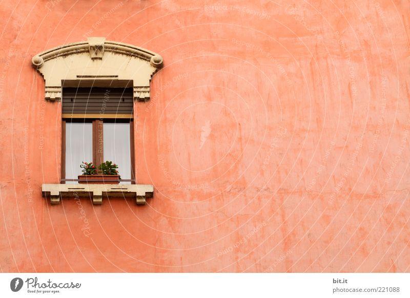 Julia, lass dein Haar herunter... Pflanze Mauer Wand Fassade Fenster Stein alt historisch retro rosa einzigartig Farbe Ferien & Urlaub & Reisen Venedig Blume