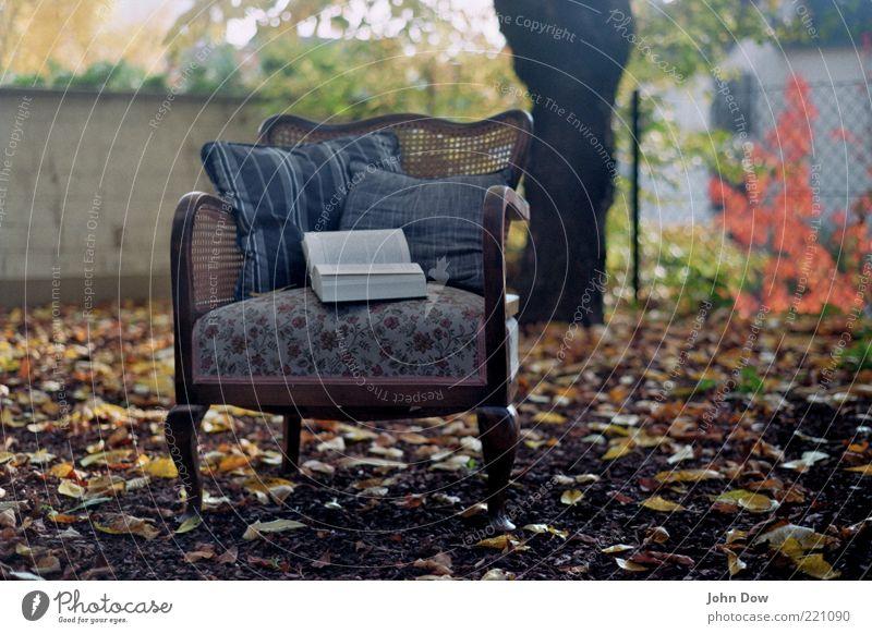 Herbstgeflüster Garten Bildung lernen Baum Sträucher Menschenleer Sessel Kissen Buch gemütlich Freiheit Blatt Idylle Nostalgie blättern blätternd