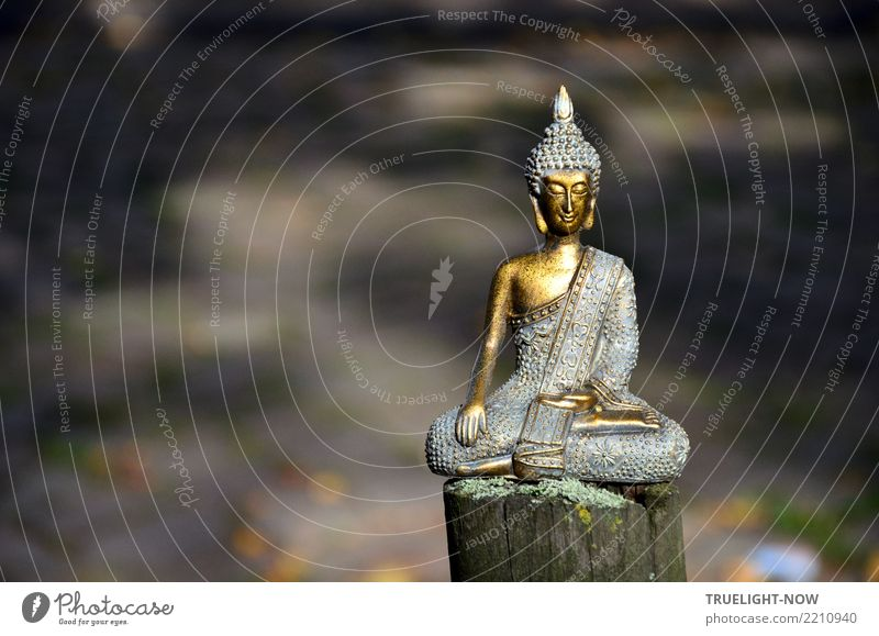 Buddha auf Zaunpfahl meditierend Gesunde Ernährung Erholung ruhig Leben Gesundheit Wege & Pfade Holz Gesundheitswesen Glück Freiheit grau braun Zufriedenheit