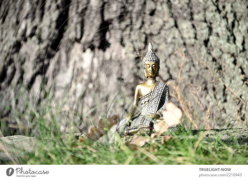 Goldener Buddha am Fuß einer Eiche meditierend blau grün Baum Erholung ruhig Lifestyle Gesundheit Holz Gras Gesundheitswesen Glück grau braun gold Kultur