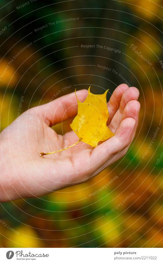 Ahornblatt in der Hand einer jungen Dame Kind Frau Mensch Natur Jugendliche Junge Frau Pflanze grün Blatt Wald Erwachsene gelb Umwelt Herbst feminin