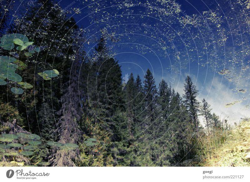 Shadow Lake Umwelt Himmel Wolken Baum Blatt Seerosen Seerosenblatt Wasserpflanze Wald Seeufer Kanada blau gelb grün ästhetisch Idylle Farbfoto Außenaufnahme