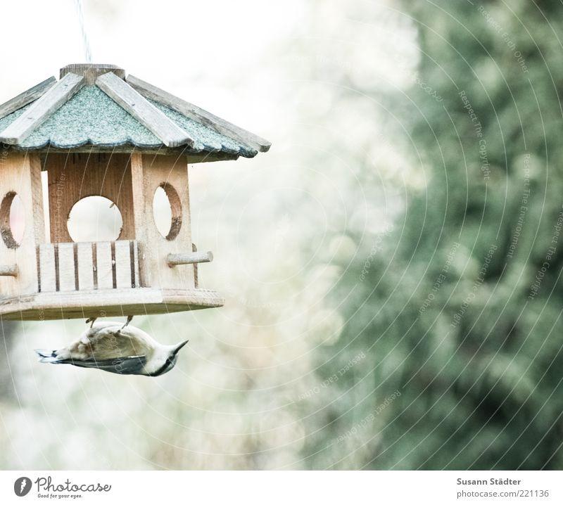 mission impossible Ernährung Tier Herbst Vogel Flügel geheimnisvoll entdecken Appetit & Hunger verstecken hängen Schnabel Futter Krallen Spatz Vogelfutter Futterhäuschen