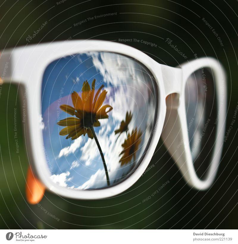 Ich will Sommer!!! Pflanze Himmel Wolken Schönes Wetter Blume Blüte Accessoire Brille Sonnenbrille blau schwarz weiß Spiegelbild Brillengestell UV-Strahlung