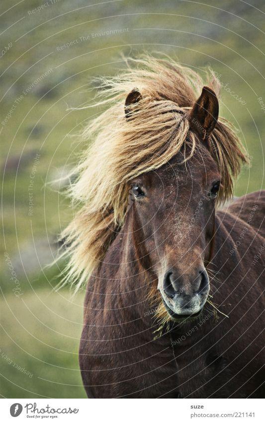 Es stürmt ... Natur schön Tier Wiese Freiheit Landschaft Stimmung warten Wind Pferd ästhetisch stehen Tiergesicht wild natürlich Wildtier