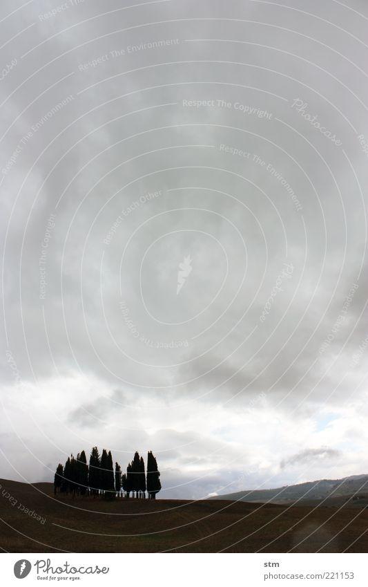 stille beobachter Umwelt Natur Landschaft Pflanze Himmel Wolken Gewitterwolken Horizont Herbst Wetter schlechtes Wetter Regen Baum Zypresse Feld Hügel Wäldchen