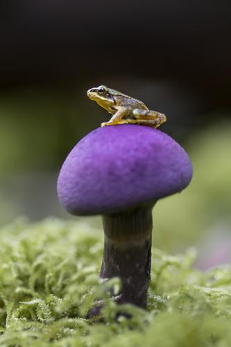 Froschkönig Natur Pflanze grün Tier Wald Herbst außergewöhnlich braun oben genießen Perspektive warten beobachten violett Moos Pilz