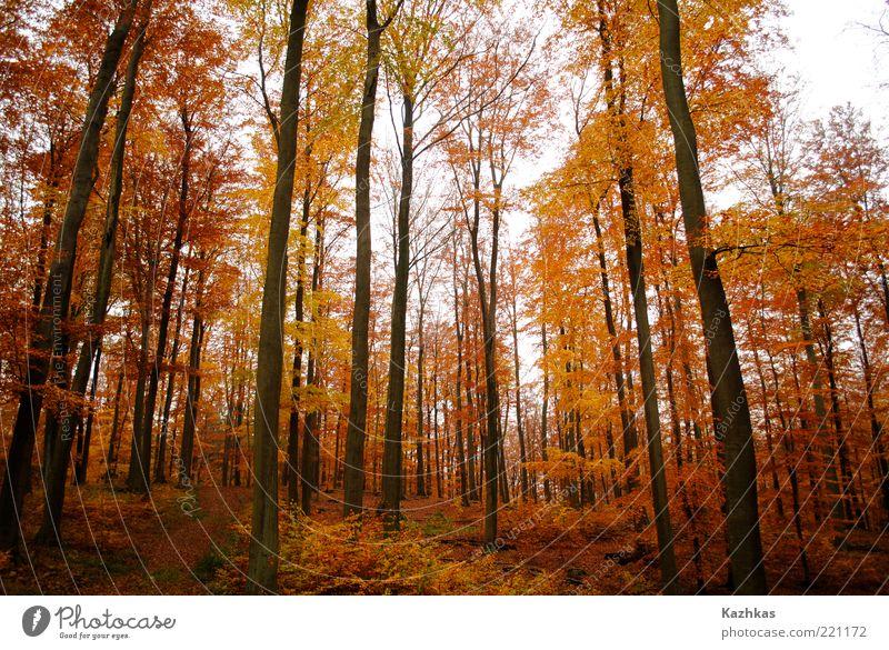 Baum Pflanze Ferien & Urlaub & Reisen Blatt schwarz gelb Wald Herbst Freiheit Park Deutschland Europa Tourismus