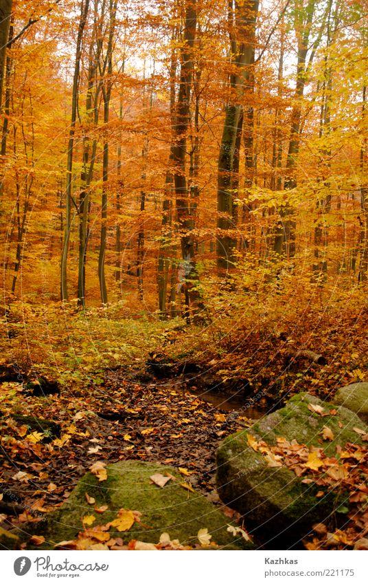 Natur Baum Pflanze Blatt schwarz gelb Wald Herbst Stein Park Deutschland Umwelt Europa Sehenswürdigkeit Wildpflanze