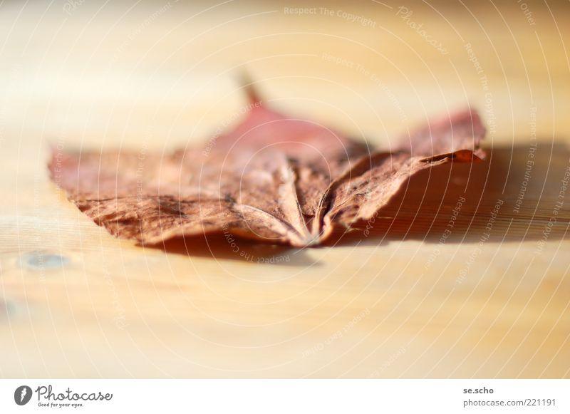 Endlichkeit schön Pflanze Blatt Herbst Stimmung authentisch Ende Vergänglichkeit verlieren Blattadern Holzuntergrund