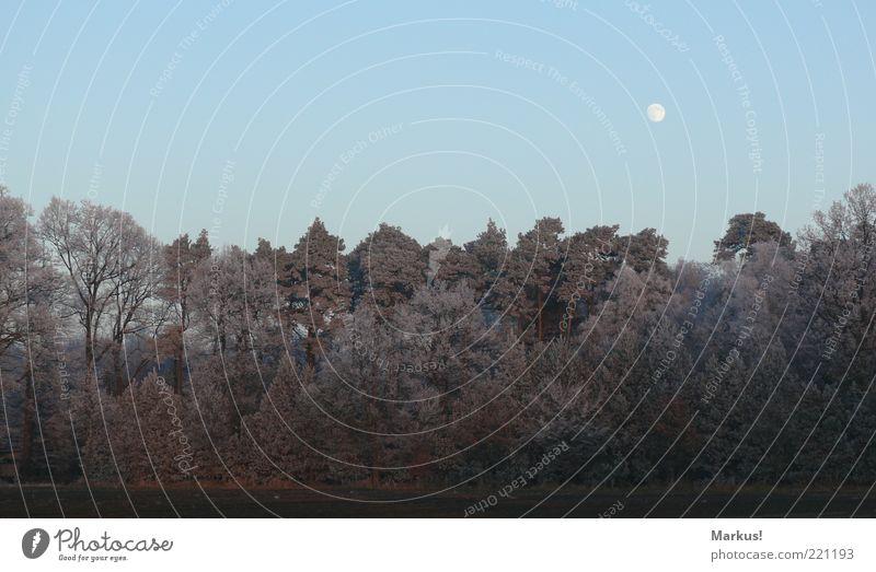 Mondaufgang Natur schön Himmel Baum Winter ruhig Wald Landschaft Eis Stimmung Umwelt Frost authentisch Waldrand Vollmond
