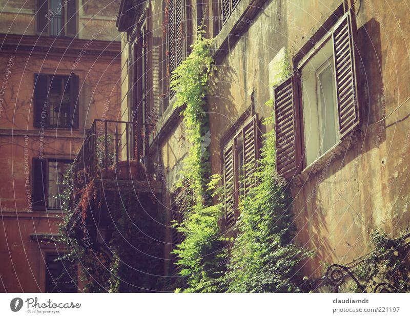 Oktober in Rom Stadt Altstadt Haus Gebäude Architektur Fassade Balkon Fenster alt grün Fensterladen Ranke Naturwuchs Kletterpflanzen verfallen Romantik Idylle
