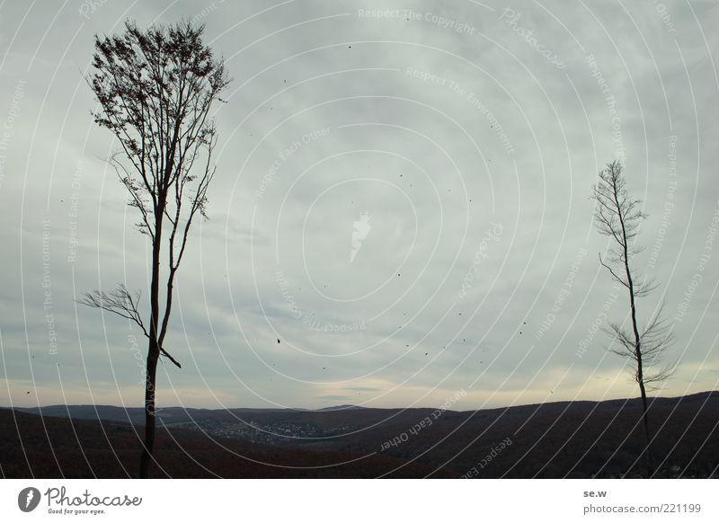 Waldsterben Natur Himmel Baum ruhig Wolken Einsamkeit dunkel kalt Herbst grau braun Wind Vergänglichkeit Unendlichkeit Hügel