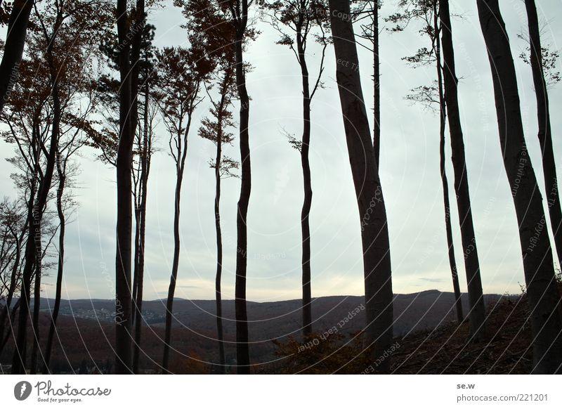 Wienerwald Natur Landschaft Himmel Wolken Herbst Baum Wald Hügel beobachten Unendlichkeit kalt braun grau schwarz ruhig Einsamkeit Vergänglichkeit Menschenleer
