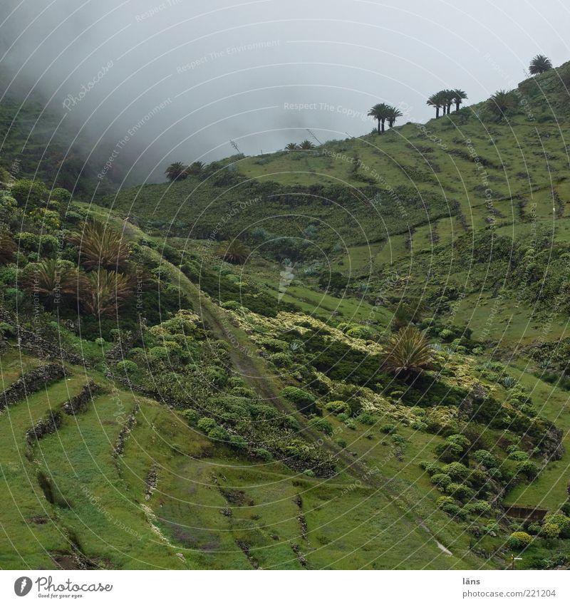 wolkengrenze Umwelt Natur Landschaft Pflanze Wolken Baum Gras Sträucher Grünpflanze Nutzpflanze Wildpflanze Palme Wiese Berge u. Gebirge Wege & Pfade grün