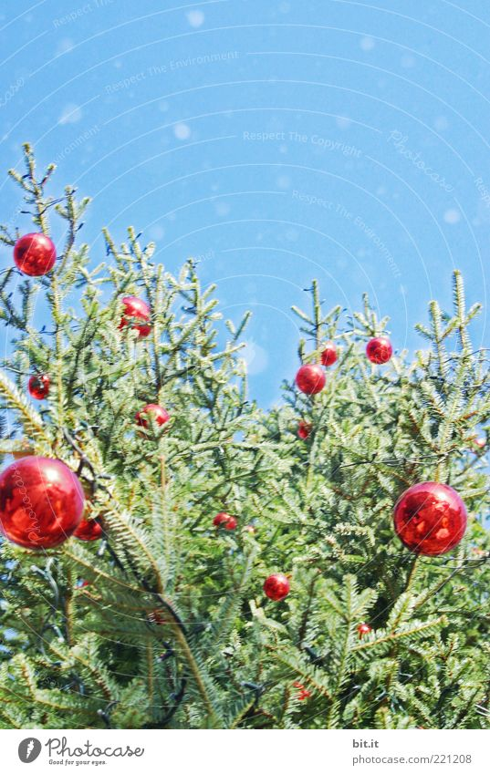 Schneeflöckchen... (VI) Himmel Wolkenloser Himmel Winter Schneefall Baum Feste & Feiern glänzend Kitsch blau rot Vorfreude Tradition Christbaumkugel
