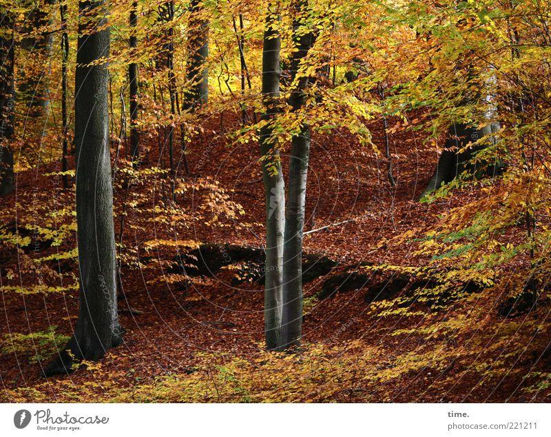 Der Hirsch ist heute scheu und kommt nicht Natur schön Baum Blatt gelb Wald Herbst braun Umwelt gold Ast außergewöhnlich Hügel leuchten Dynamik aufwärts