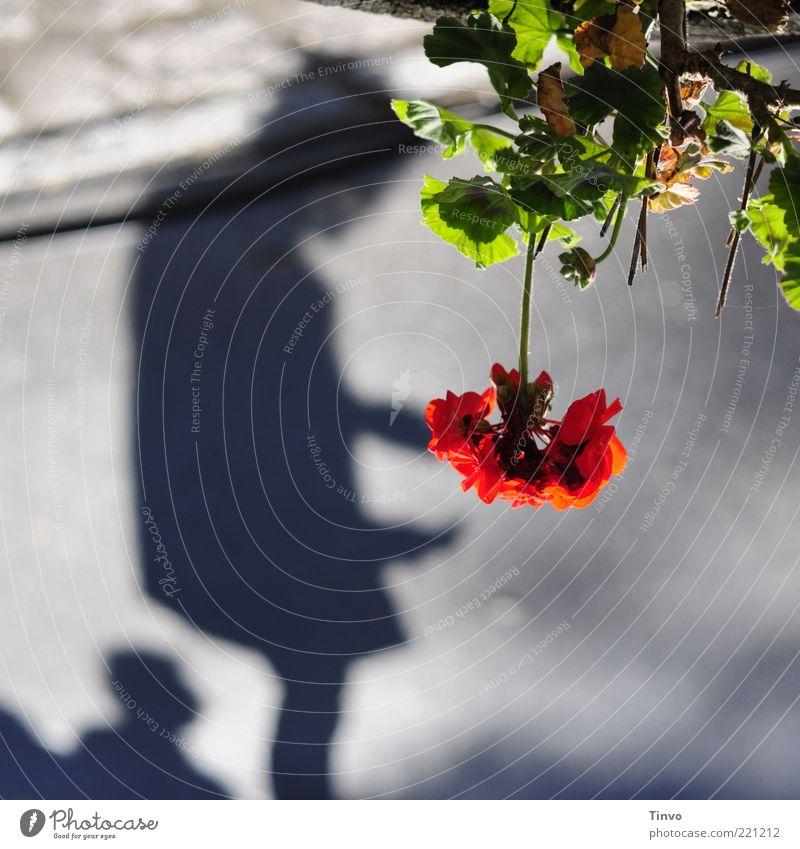 Spiegelwelt Mensch Blume grün Pflanze rot ruhig Gefühle grau Traurigkeit Hoffnung Sehnsucht geheimnisvoll leuchten hängend