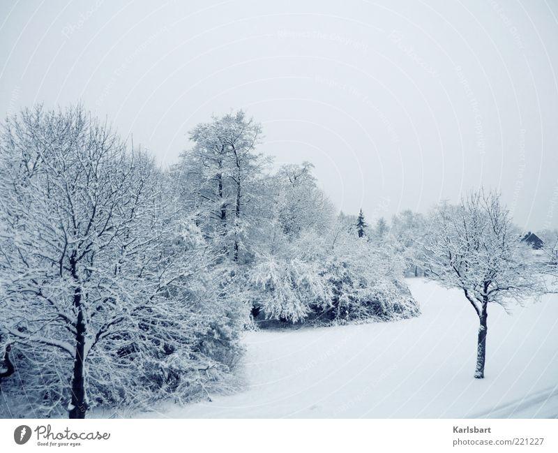 träume. erfrier'n. Himmel Baum Winter ruhig kalt Schnee Wiese Landschaft Eis hell Umwelt Frost Sträucher Wandel & Veränderung Klima Dorf