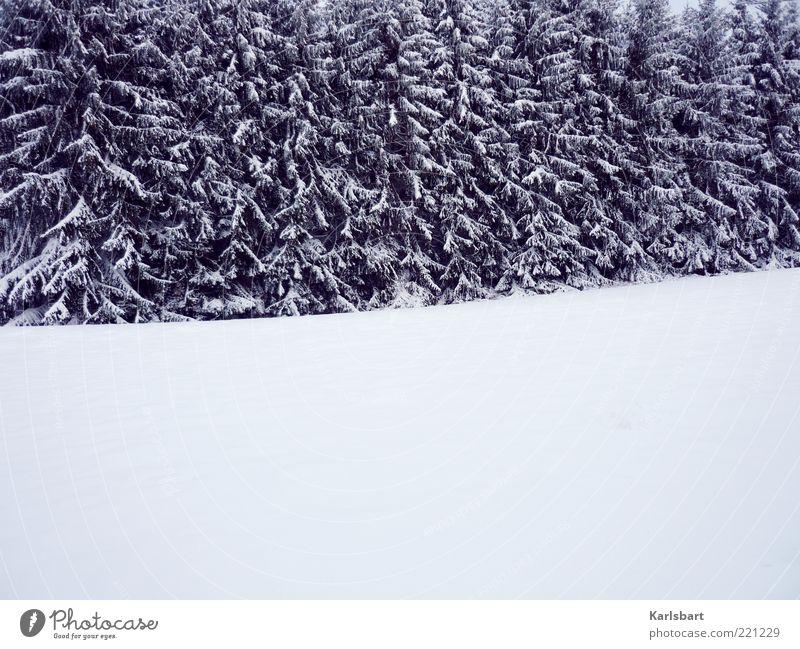 white room. Natur Baum Winter ruhig Wald Schnee Erholung Landschaft Eis Linie Umwelt Frost Wandel & Veränderung Klima Tanne Wohlgefühl