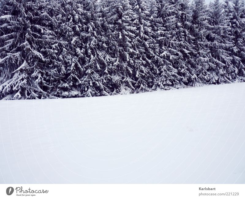white room. Wohlgefühl Erholung ruhig Winter Schnee Umwelt Natur Landschaft Klima Eis Frost Baum Wald Menschenleer Linie Wandel & Veränderung Tanne