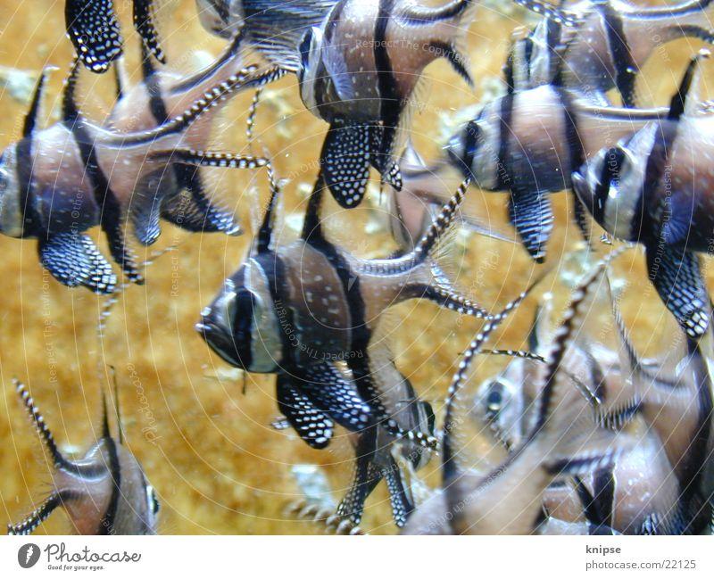 Fischies Verkehr mehrere tauchen Schwarm