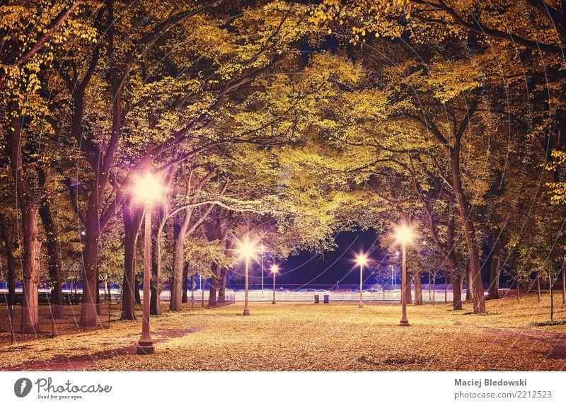 Stadtpark in der Nacht. Sightseeing Lampe Herbst Baum Blatt Park grün violett rosa Stimmung Traurigkeit Heimweh Erholung geheimnisvoll Großstadt Jahreszeiten
