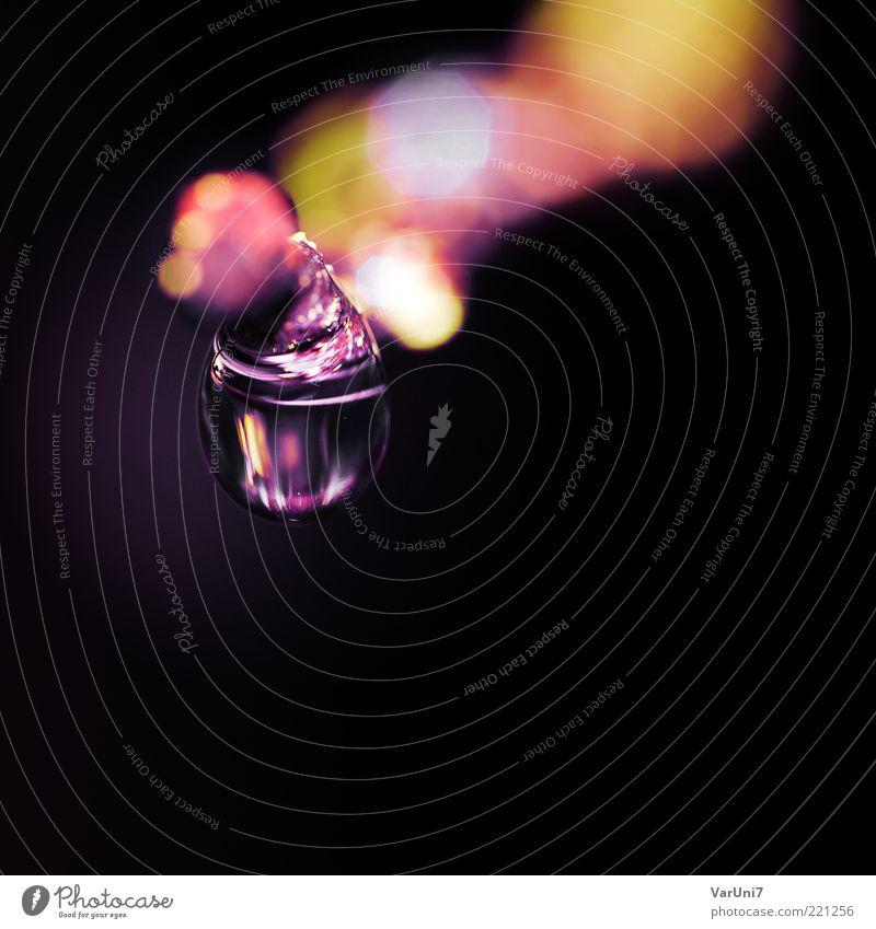naturel Umwelt Natur Urelemente Wasser Wassertropfen ästhetisch Flüssigkeit glänzend schön klein nah rund violett Reinheit träumen Duft elegant exotisch Farbe