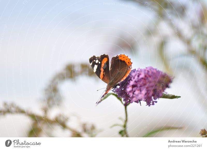 Letzten Sommer I Natur weiß grün schön Pflanze Blume ruhig Tier Blüte braun warten elegant sitzen frei Wildtier