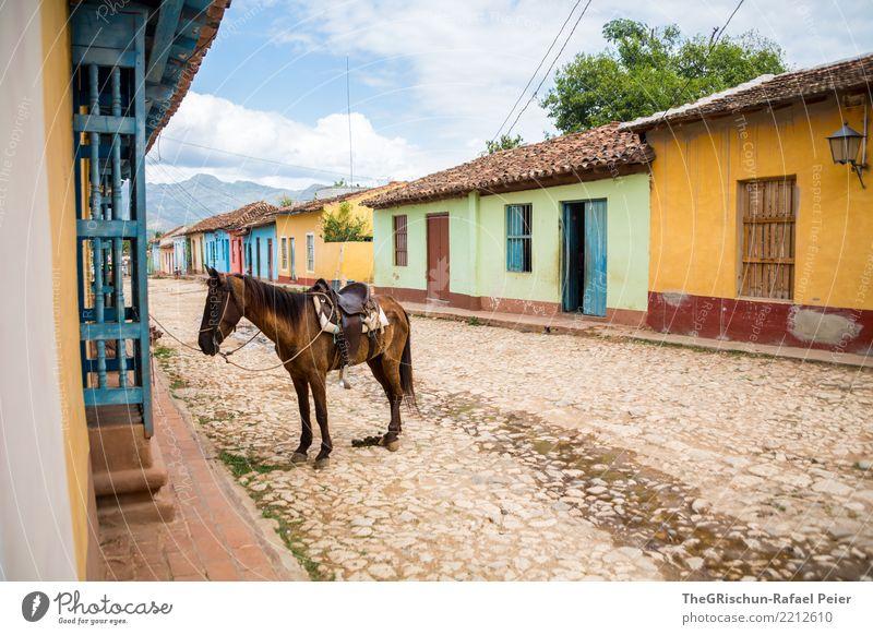 Trinidad blau grün Tier Wolken Reisefotografie Straße gelb braun warten Pause Pferd Kuba Pflastersteine Reiten Nutztier Häuserzeile