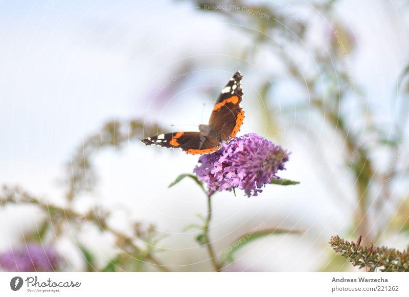 Letzten Sommer II Natur weiß grün schön Pflanze Blume ruhig Tier Blüte braun warten elegant sitzen frei Wildtier