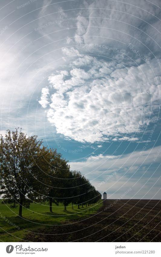 wegmarken. Baum Ferien & Urlaub & Reisen Wolken Erholung Herbst Landschaft Feld Umwelt Ausflug ästhetisch Turm Unendlichkeit Hügel Landwirtschaft Wolkenhimmel