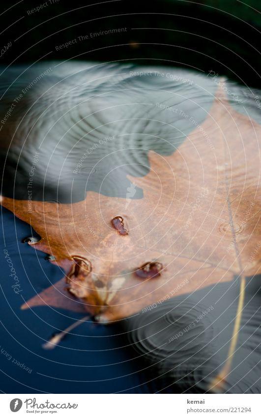Regenzeit Umwelt Natur Pflanze Wasser Herbst Klima schlechtes Wetter Blatt dunkel Flüssigkeit nass Im Wasser treiben Kreis Wasseroberfläche Wellen untergehen