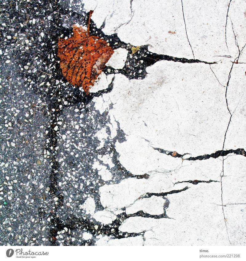Lebenslinien #20 Umwelt Herbst Blatt Wege & Pfade Streifen kaputt nass braun grau weiß Vergänglichkeit Asphalt Riss welk Fahrbahnmarkierung Bodenbelag Teer